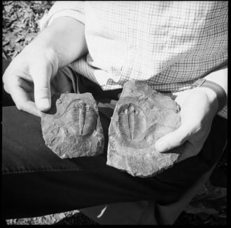 Two trilobites